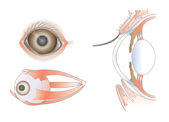Aspects-of-the-eye-