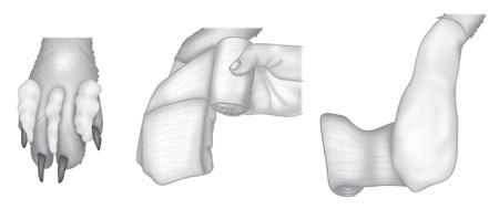 Bandaging-a-paw