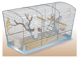 Bird-cage-copy