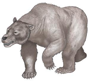 Cave-bear