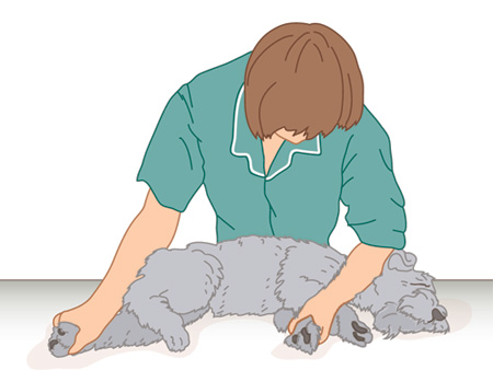 Dog-restraint