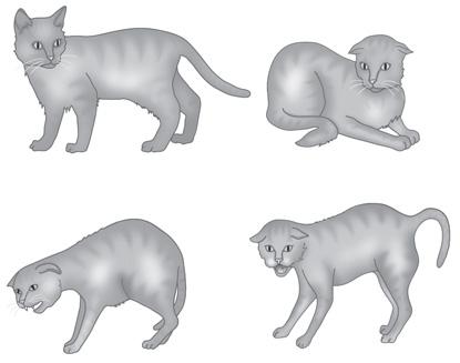 Feline-body-language