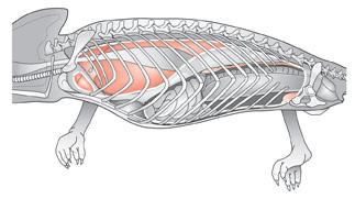 Lizard-anatomy