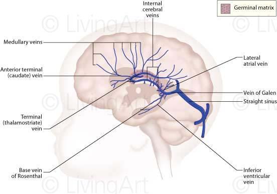 NEW-Baby-brain