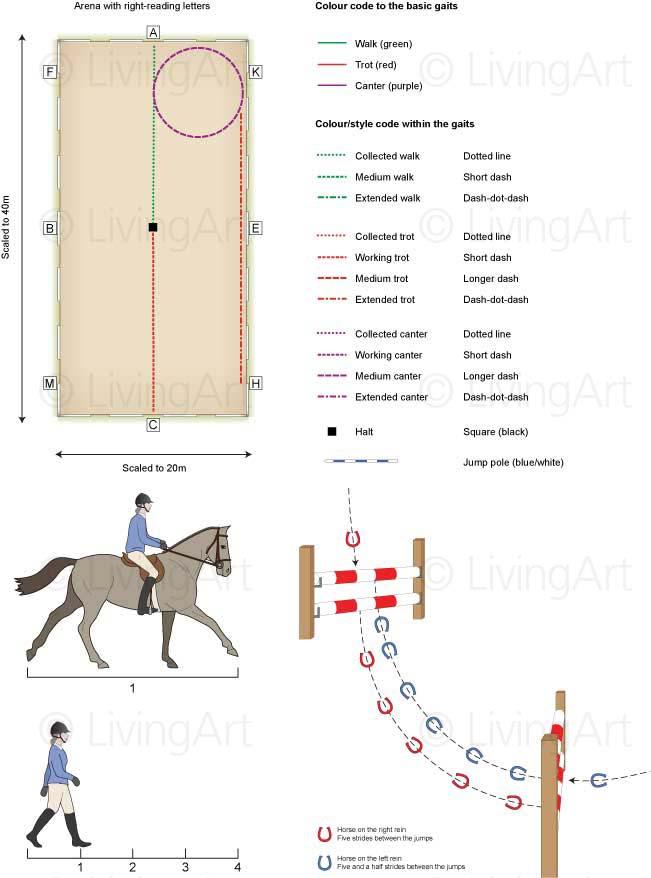 NEW-Equine-Schooling