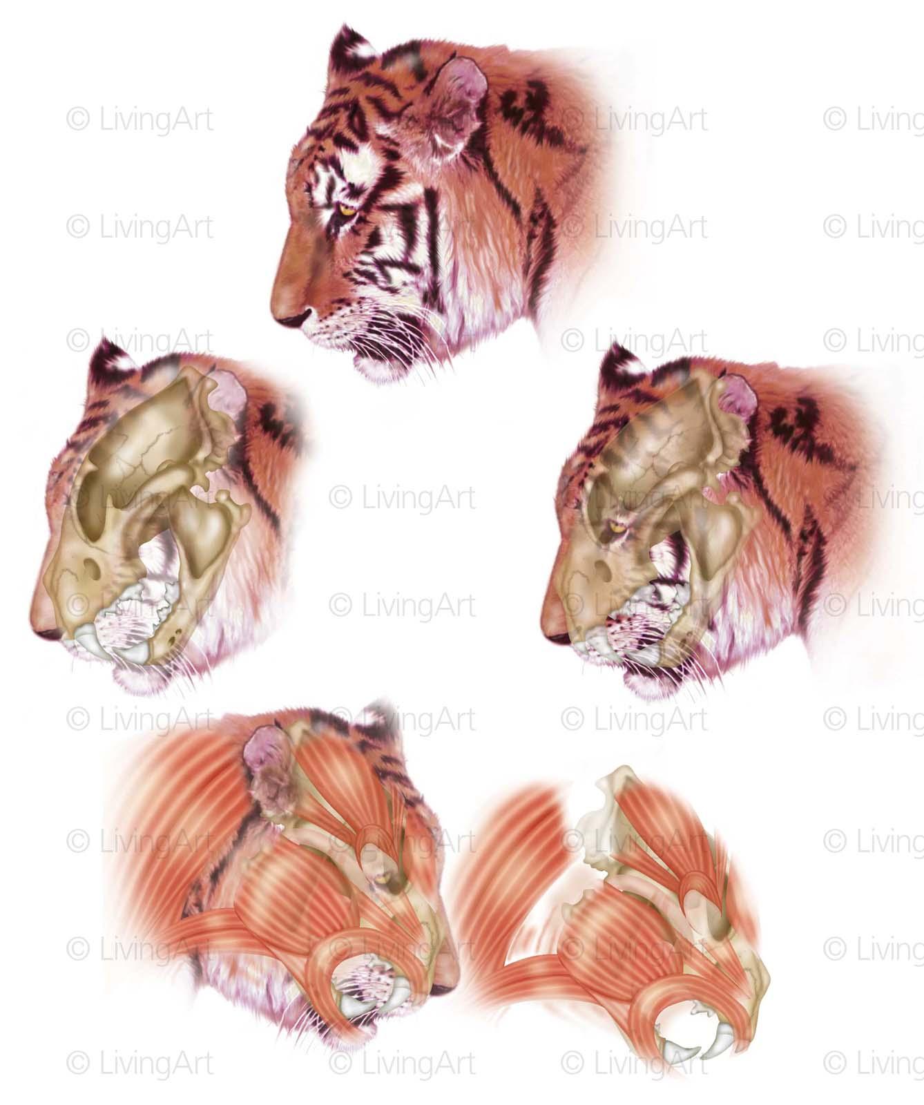 NEW Tiger-5-tigers