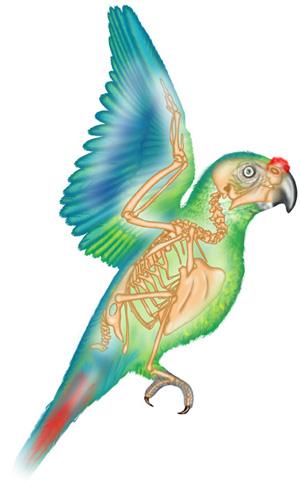 Parrot-colour