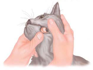 feline-eye-examination