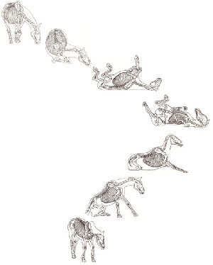 rolling-horses