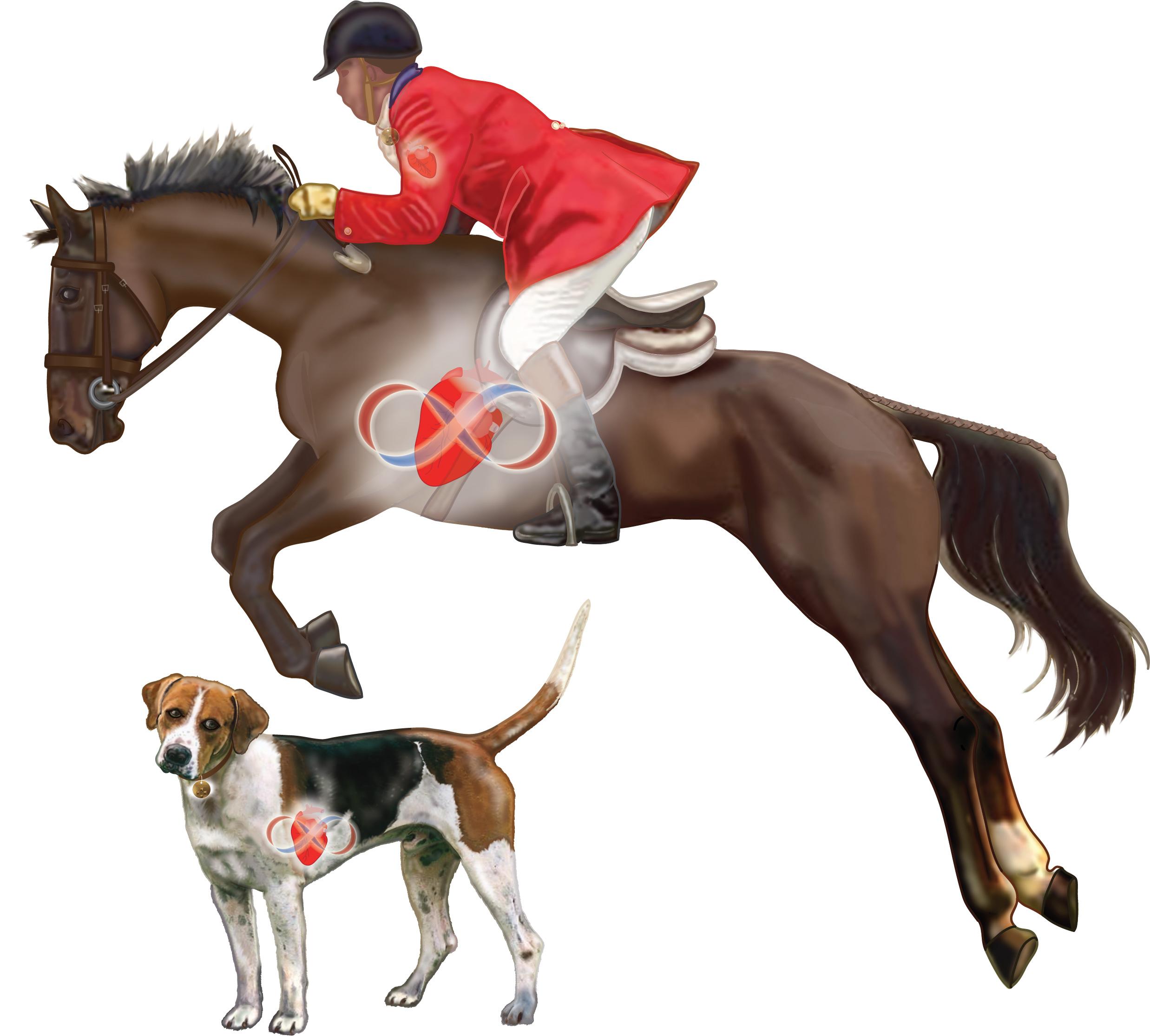 Horse-and-Hound